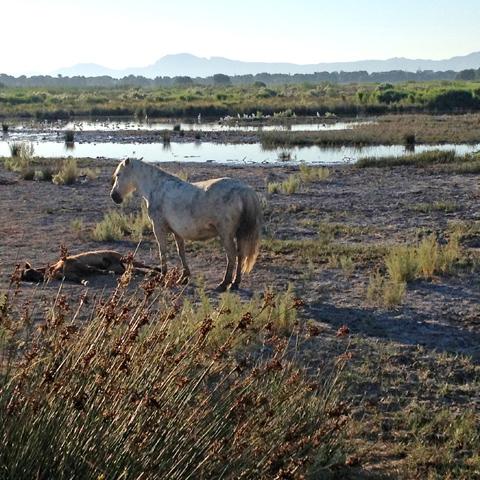 Bild från ett av gömslena i S'Albufera Natural Park