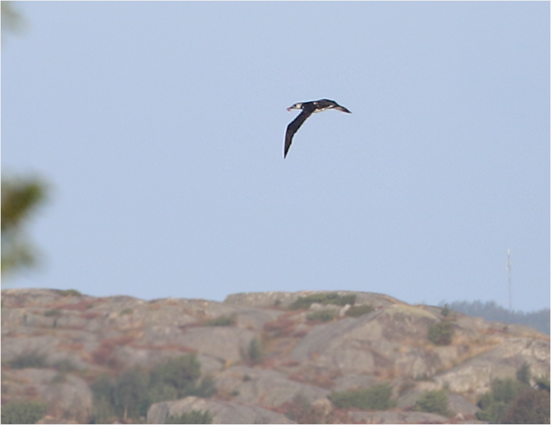 Havssula, Stora Amundö