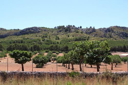 Fikonträd vid Fodral Velles